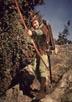 Flynn, Errol [The Adventures of Robin Hood]