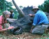 Jurassic Park [Cast]